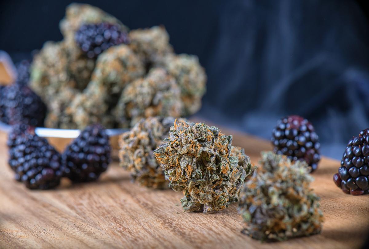 terpenoids in cannabis