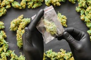 gloved hands hold marijuana nug in plastic bag