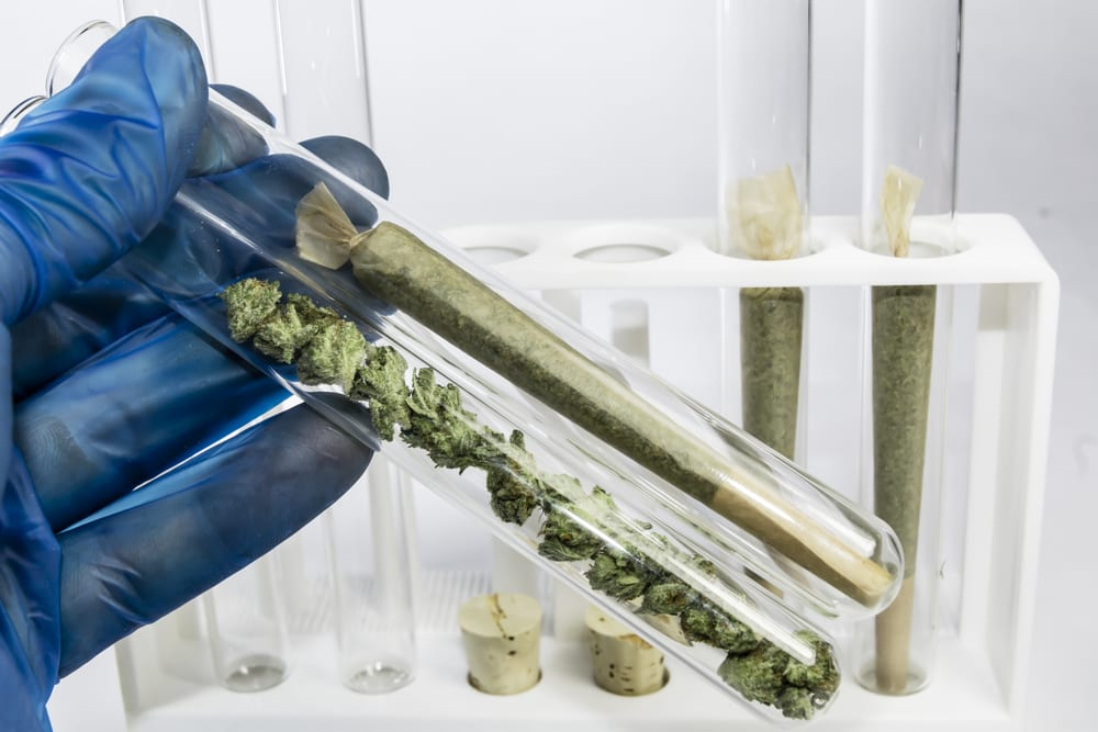 two small test tubes of marijuana being held by a glove-covered hand