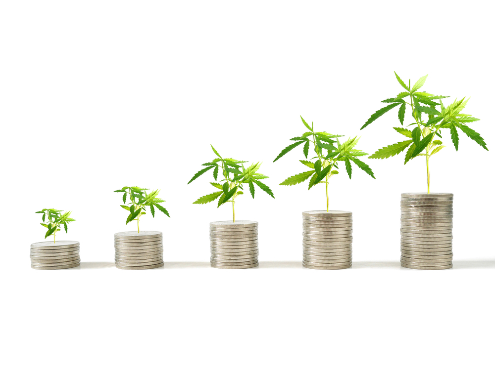 cannabis plants growing coins