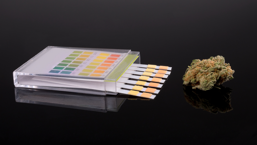 marijuana drug test strips