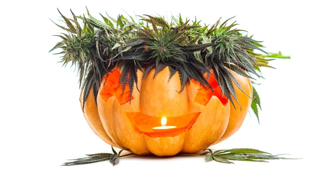 croptober marijuana leaf carved pumpkin